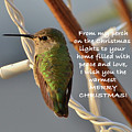 Hummingbird Christmas Card by Debby Pueschel