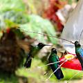 Hummingbird Close Encounter by Al Bourassa