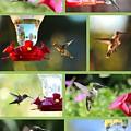 Hummingbird Collage 2 by Carol Groenen