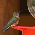 Hummingbird De by Ernie Echols