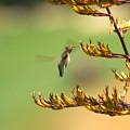 Hummingbird Drinking Nectar by Jill Reger