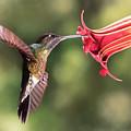 Hummingbird Enjoying Beautiful Flower by Linda D Lester