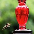 Hummingbird Feeder by Andrew Fairfield