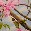 Hummingbird Feeding On Lilac by Susan Bruner