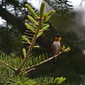 Hummingbird Flashing by Hella Buchheim