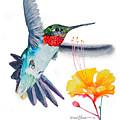 Da169 Hummingbird Flittering Daniel Adams by Daniel Adams