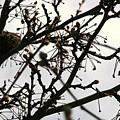 Hummingbird Heaven by Bonnie Lee