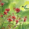 Hummingbird In Beebalm by Kathryn Duncan
