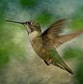 Hummingbird In Flight II by Sandy Keeton