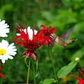 Hummingbird In Flowers by Kat J