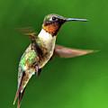 Hummingbird In Mid-air by Jeff R Clow