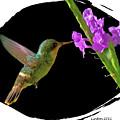 Hummingbird by Larry Linton