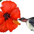 Hummingbird by Marsha Young