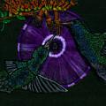 Hummingbird Morning Glory by Michelle Audas