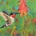 Hummingbird by Nancy Jolley