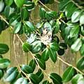 Hummingbird Nest by Vennie Kocsis