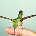 Hummingbird On My Finger by Gregory Scott