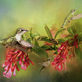 Hummingbird Paradise by Pam  Holdsworth