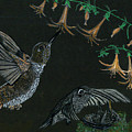 Hummingbird Parents by Michelle Audas