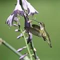 Hummingbird by Paul McCarthy