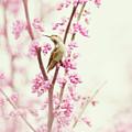 Hummingbird Perched Among Pink Blossoms by Susan Gary