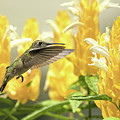 Hummingbird Reaches For The Gold by William Jobes