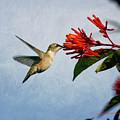 Hummingbird Red Flowers by Charles McKelroy