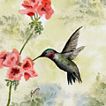 Hummingbird by Sam Sidders