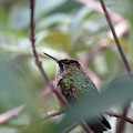 Hummingbird by Creations by Shaunna Lynn