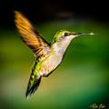 Hummingbird Sparkle by Rikk Flohr