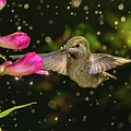 Hummingbird Visits Flowers In Raining Day by William Freebilly photography