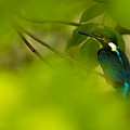 Hummingbird Wants To Hide by Gabor Tokodi