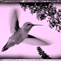 Hummingbird With Old-fashioned Frame 2  by Carol Groenen