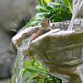 Hummingbirds Do Take Baths by Jennie Marie Schell