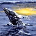 Humpback Whale Breaching by Bob Patterson
