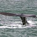 Humpback Whale Flute Alaska by NaturesPix