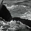Humpback Whale Fluke 3 by Robert Shard