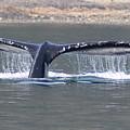 Humpback Whale Fluke by John Hughes