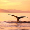 Humpback Whale Fluke by John Hyde - Printscapes