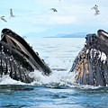 Humpback Whales In Juneau, Alaska by Tahomawind Photography