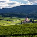 Hunawihr In The Vineyards by W Chris Fooshee