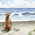 Hungarian Vizsla At The Beach by David Rogers