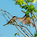 Hungry Birds In Tree Close-up by S Michael Basly PhotoGraphics By S Michael