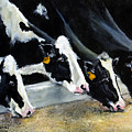 Hungry Holsteins by Adele Pfenninger