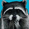 Hungry Raccoon by Carl Conway
