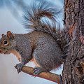 Hungry Squirrel by Trent Garverick
