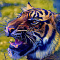 Portrait Of A  Tiger by Femina Photo Art By Maggie