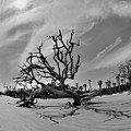 Hunting Island Beach And Driftwood Black And White by Lisa Wooten