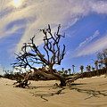 Hunting Island Beach And Driftwood by Lisa Wooten