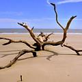 Hunting Island Beach Beaufort Sc by Lisa Wooten